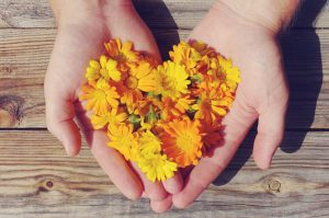 calendula, eczema treatment, natural, dry skin relief